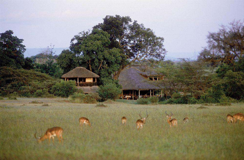 Antilopes grazing in the grass in front of guest tents at Basecamp Masai Mara safari camp in Kenya.