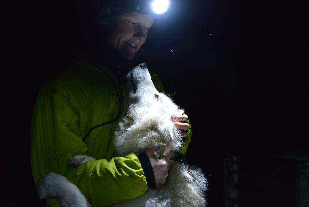 Dog Sledding Polar Night Spitsbergen