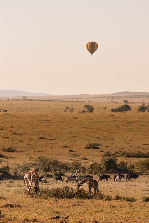 Landskap av Masai Mara Kenya