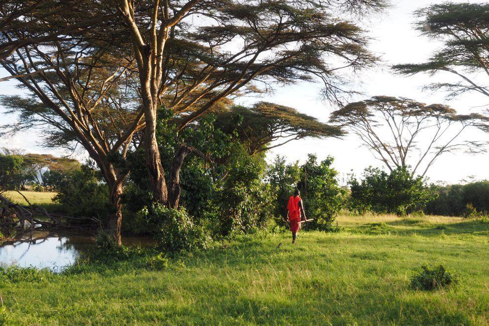 Basecamp Kenya Gåsafari