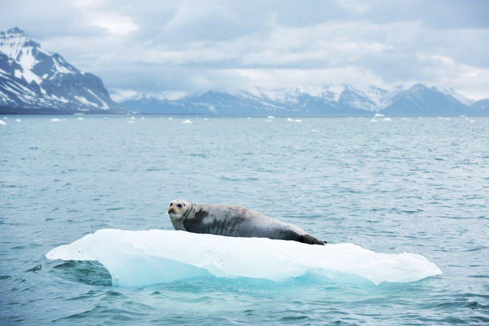 Båtsafari Svalbard
