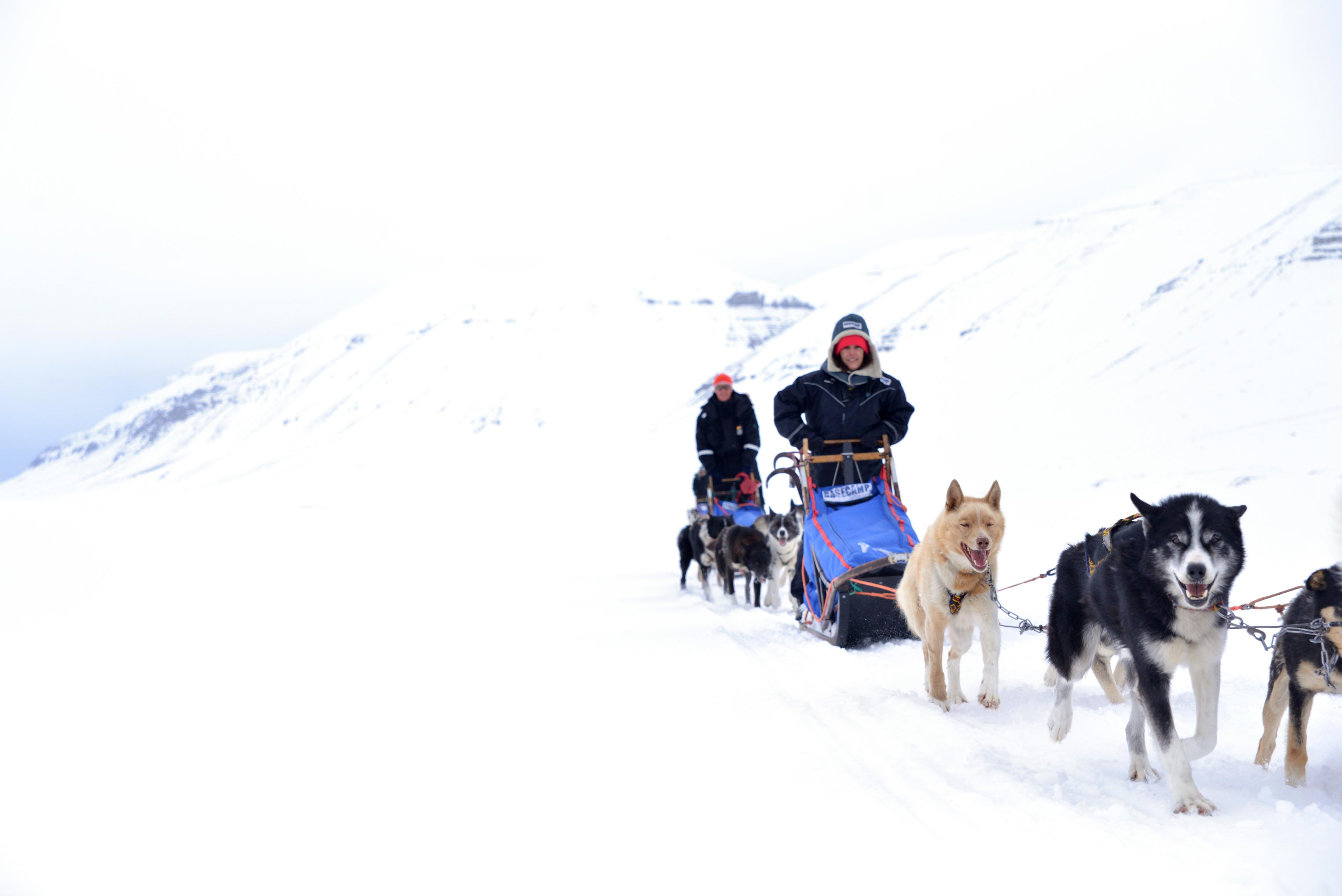 Good Time Adventures Dog Sledding