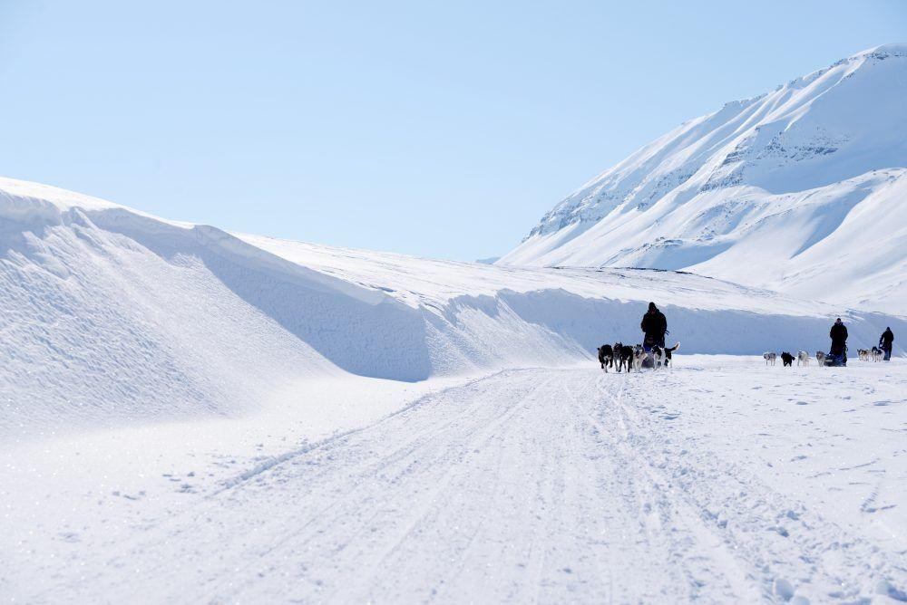 Dog sledding in Spitsbergen