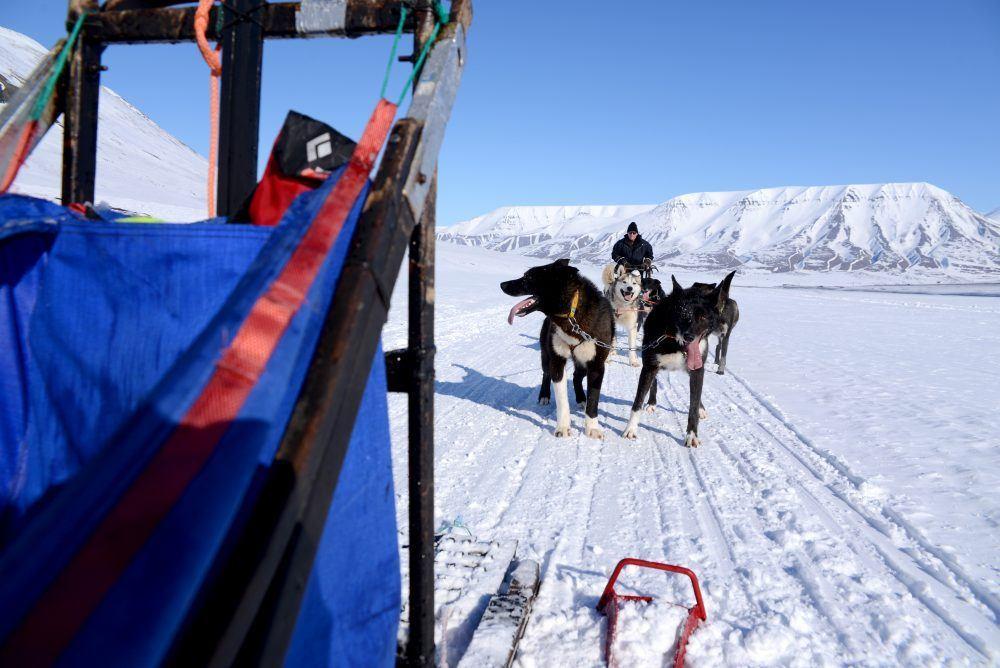 Hundekjøringstur Svalbard