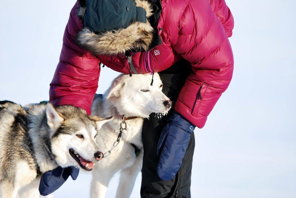 dogsledding_spitsbergen_9