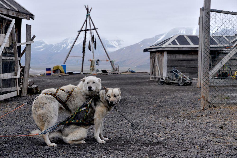 Dogsledding at summer time Spitsbergen