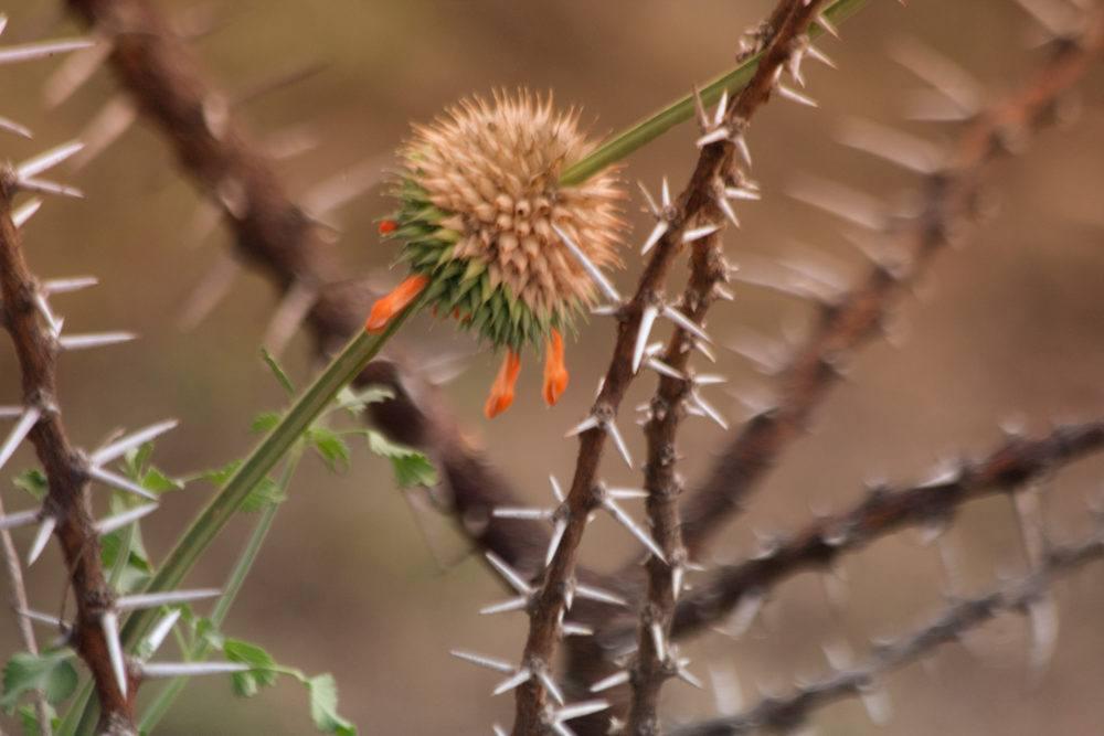 flora-at-masai-mara-kenya-8