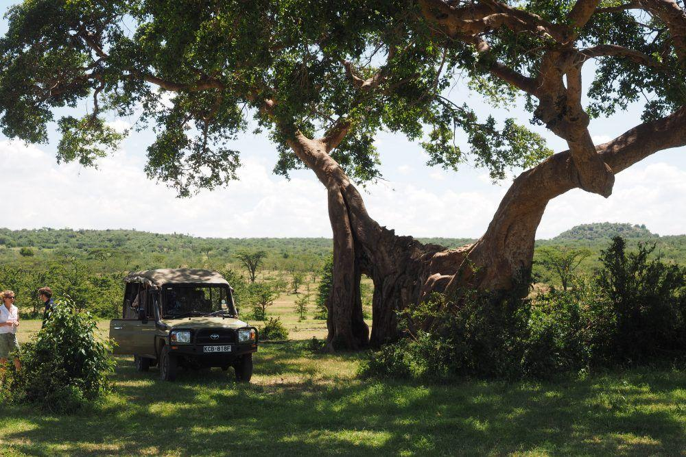 Safari jeep underneath tree, two guests standing by car, on game drive over the savannah in Masai Mara.