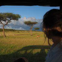 Woman in safari jeep looking at gazelle on game drive in Masai Mara, Kenya.