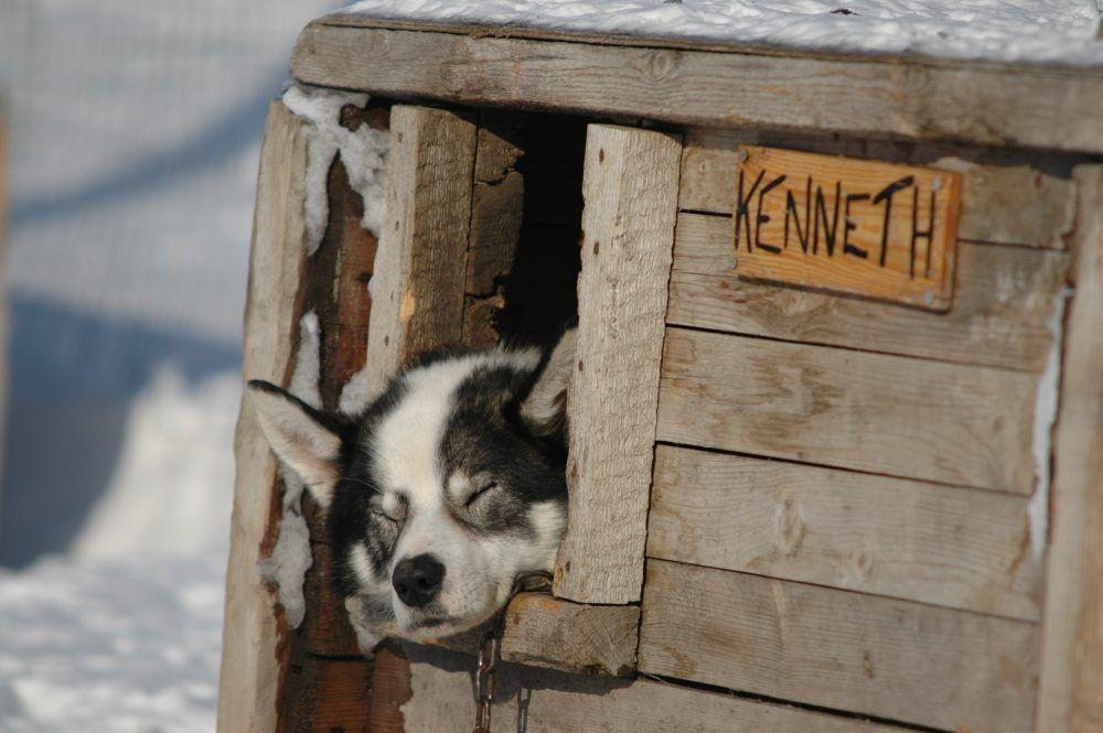 Huskies Dog Sledding Spitsberge