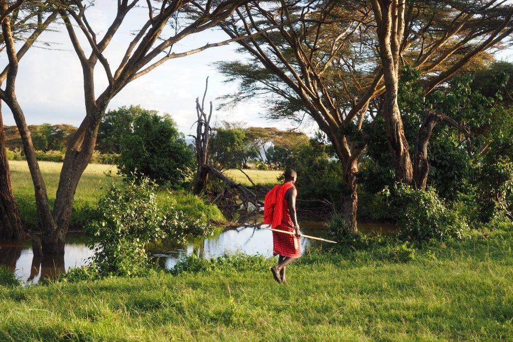 Maasai guide walking along river in Masai Mara, Kenya.