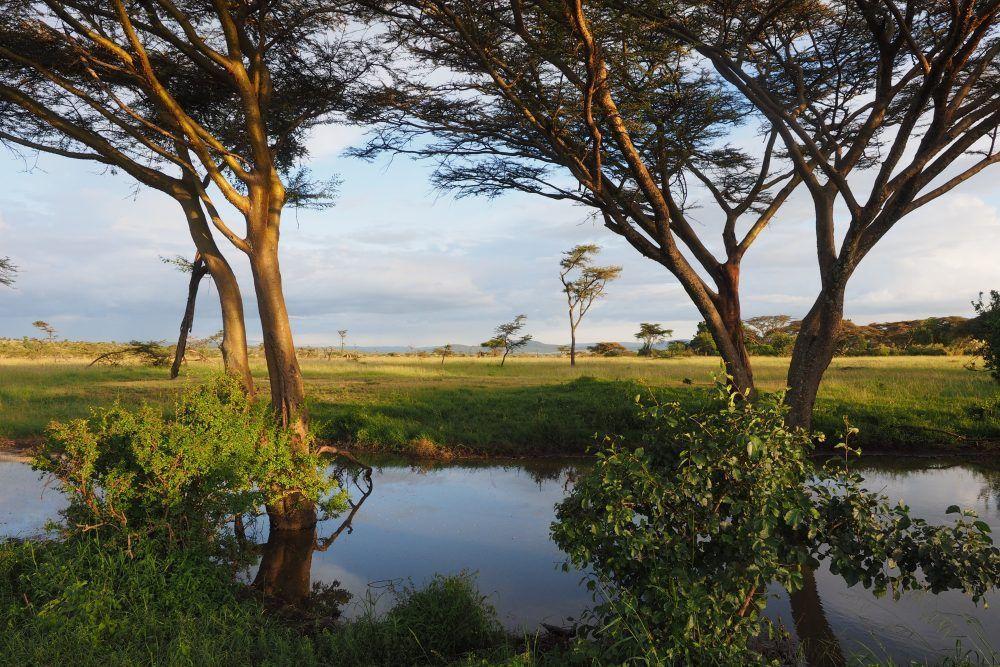 Landskap  Masai mara Kenya