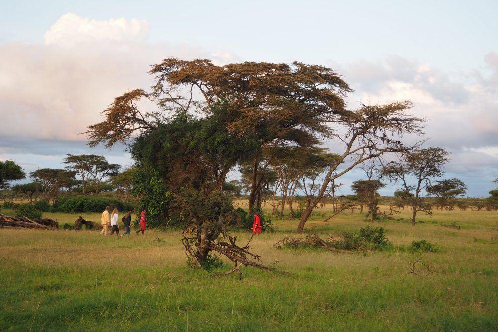 Walking Safaris Mara Naboisho