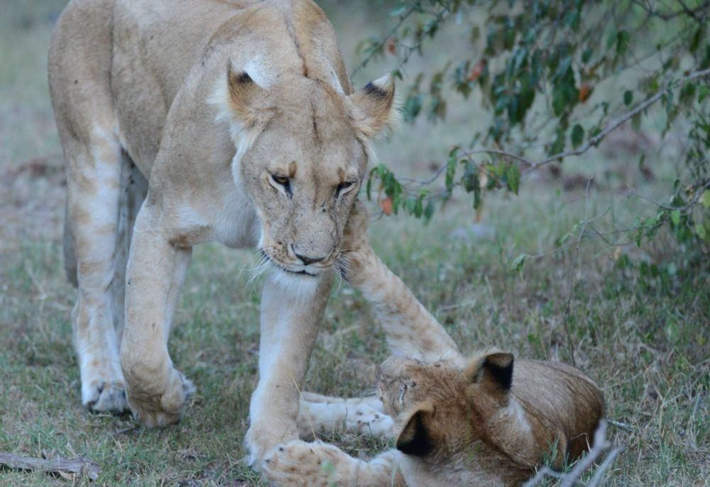 Wildlife Masai Mara Kenya