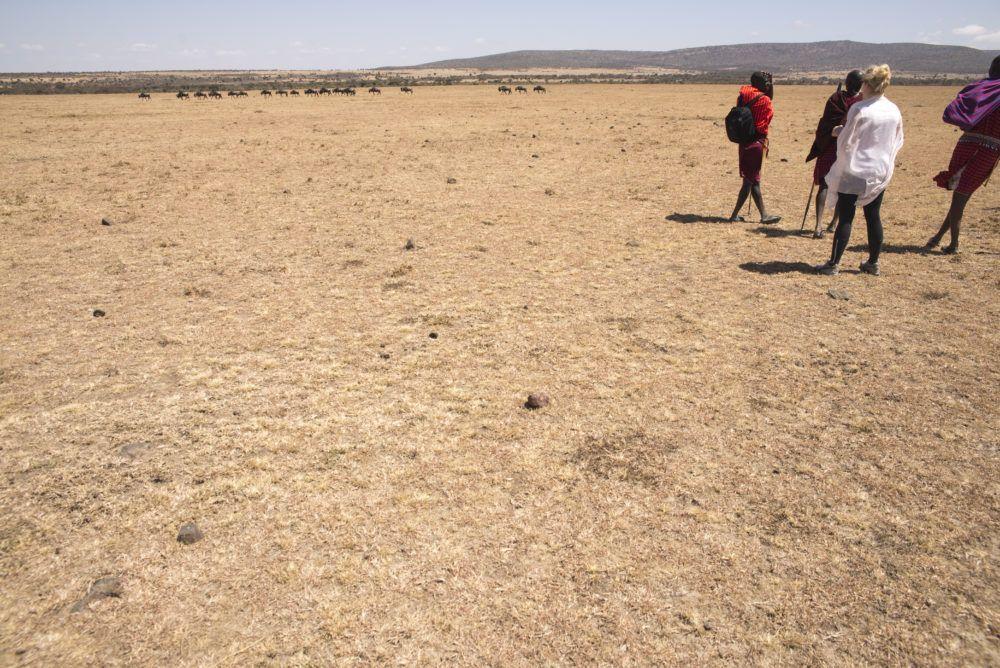 Walking Safaris at Mara Naboisho Kenya