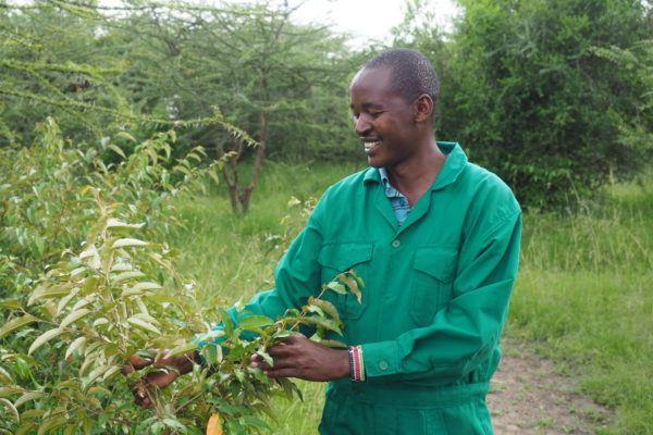 Man in green overalls tending plants at Basecamp Explorer tree planting project in Masai Mara.