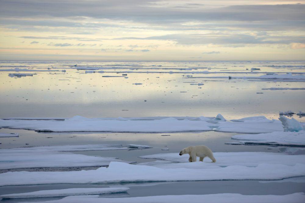 arctic_sailing_polarbear_jukkaikonen1