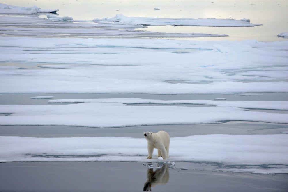arctic_sailing_polarbear_jukkaikonen3