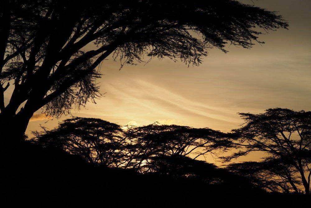 Safari in Masai Mara Kenya