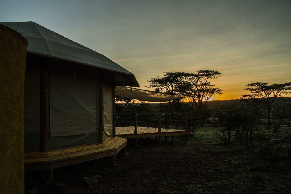 leopard-hill-at-sunrise-safaris-masai-mara-1