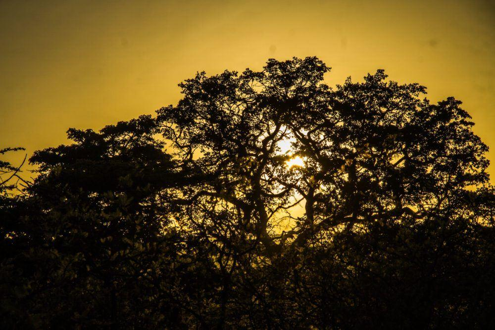 leopard-hill-at-sunrise-safaris-masai-mara-4