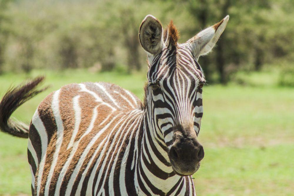 wildlife-in-masai-mara-2