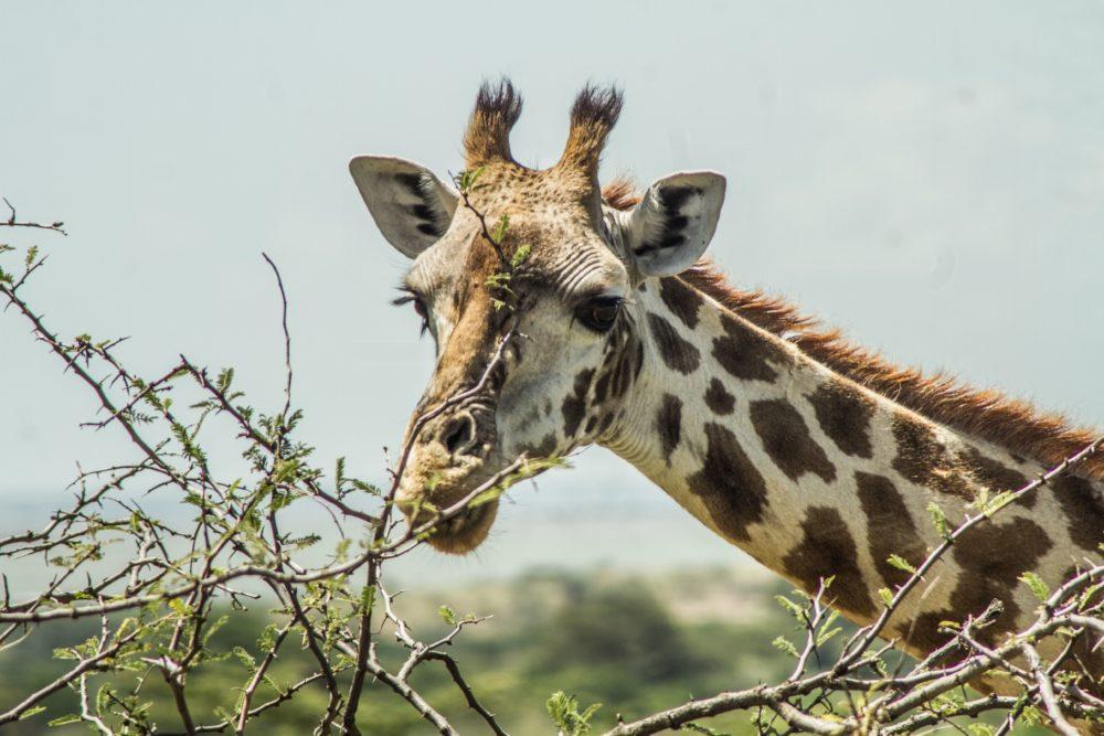 wildlife-in-masai-mara-3