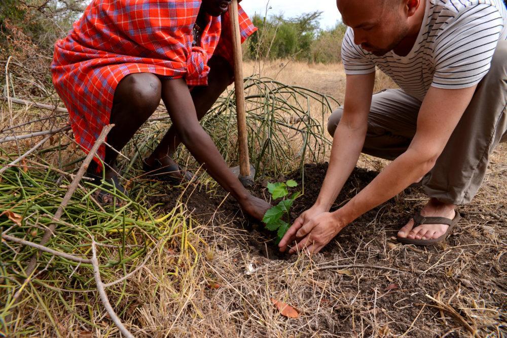 Basecamp Explorer planting of tree sapling in Masai Mara, Kenya.