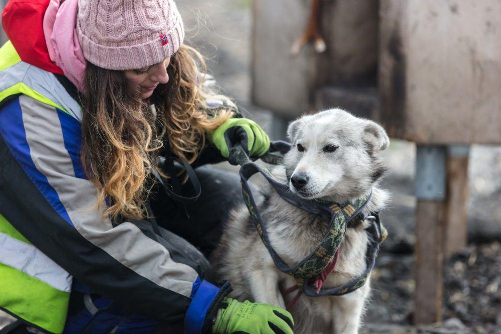 Summer dogsledding 15_Photo by Silje Forbes_Basecamp Explorer