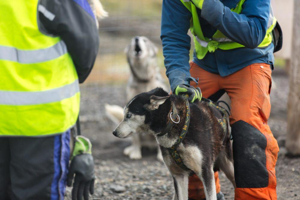 Summer dogsledding 8_Photo by Silje Forbes_Basecamp Explorer