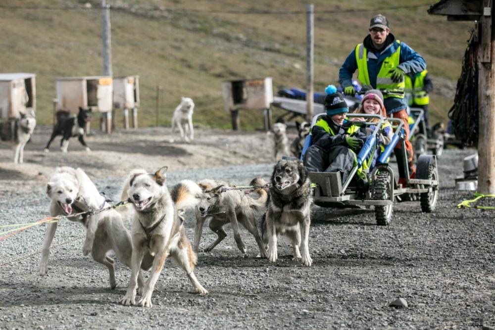 Summer dogsledding team 4_Photo by Silje Forbes_Basecamp Explorer