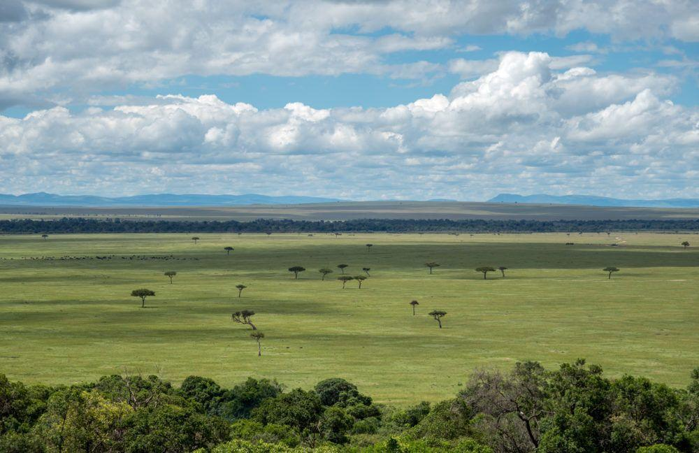 Vast green plains in Mara Naboisho Conservancy, Kenya, Africa.