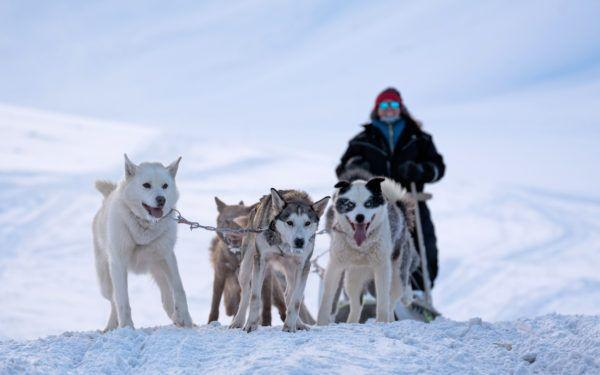 Basecamp Explorer dogsledding adventure through arctic valleys in Spitsbergen.
